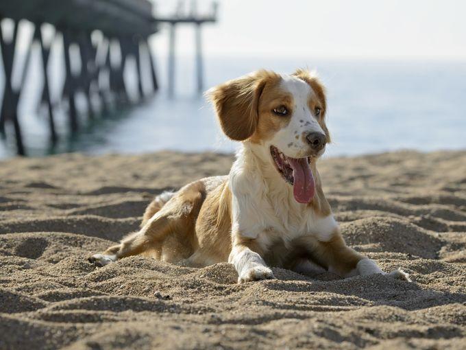 Al mare con il cane. L'atlante delle bau-beach italiane